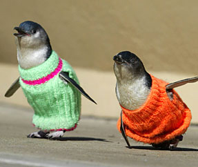 A Mormon Image:  Sweaters for the Penguins